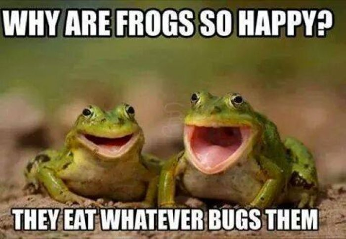 Why frogs are so happy